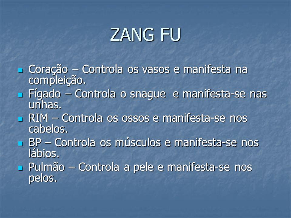 ZANG FU Coração – Controla os vasos e manifesta na compleição.
