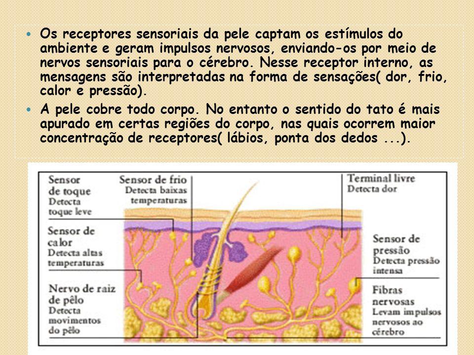 4.Relação com o Sistema Nervoso