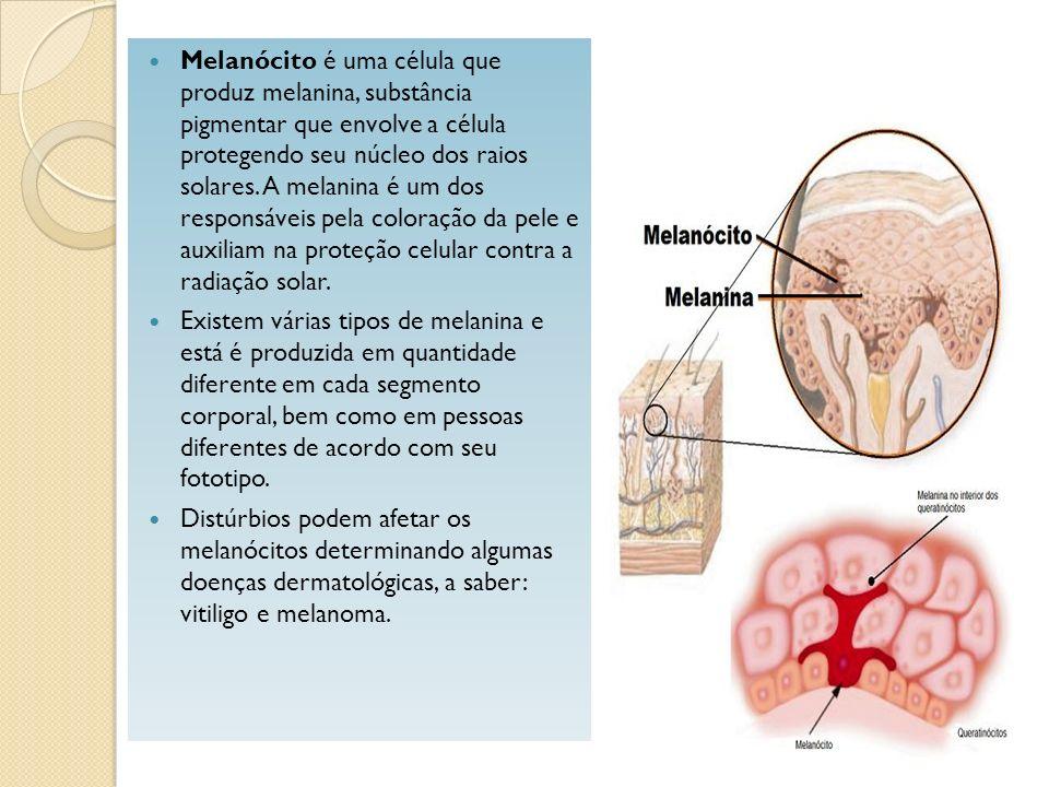 Melanócito é uma célula que produz melanina, substância pigmentar que envolve a célula protegendo seu núcleo dos raios solares. A melanina é um dos responsáveis pela coloração da pele e auxiliam na proteção celular contra a radiação solar.