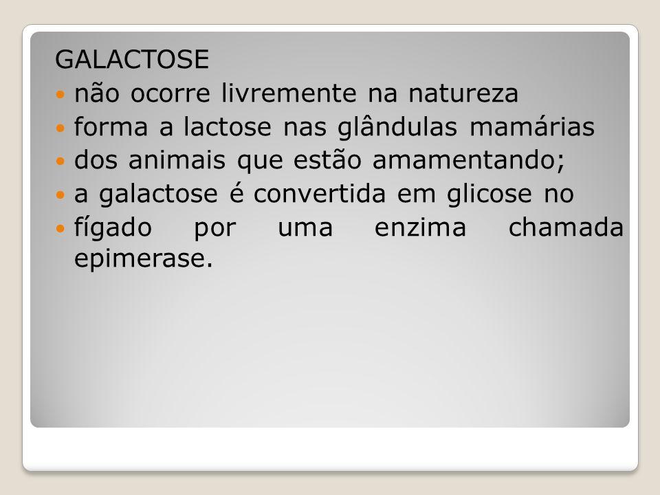 GALACTOSE não ocorre livremente na natureza. forma a lactose nas glândulas mamárias. dos animais que estão amamentando;