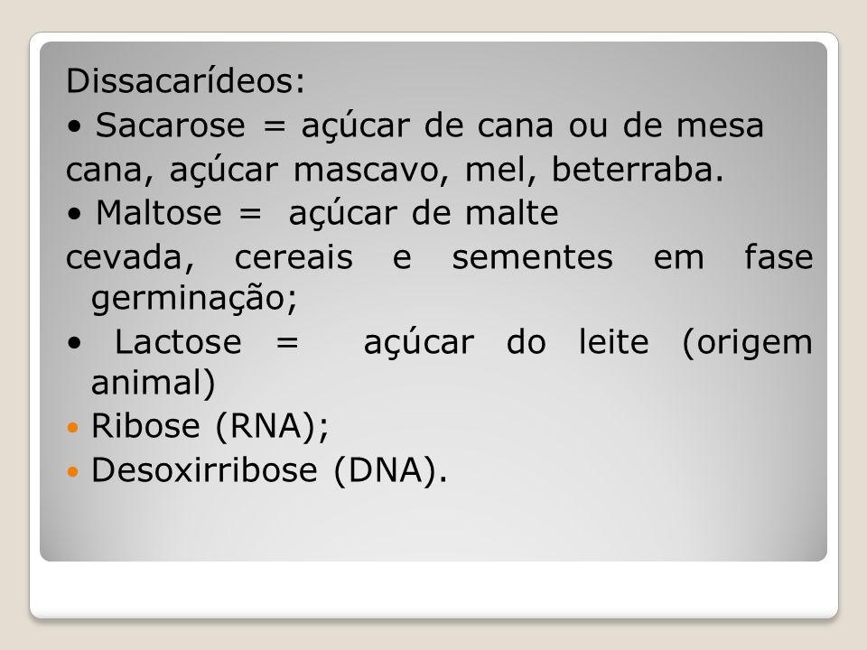 Dissacarídeos: • Sacarose = açúcar de cana ou de mesa. cana, açúcar mascavo, mel, beterraba. • Maltose = açúcar de malte.