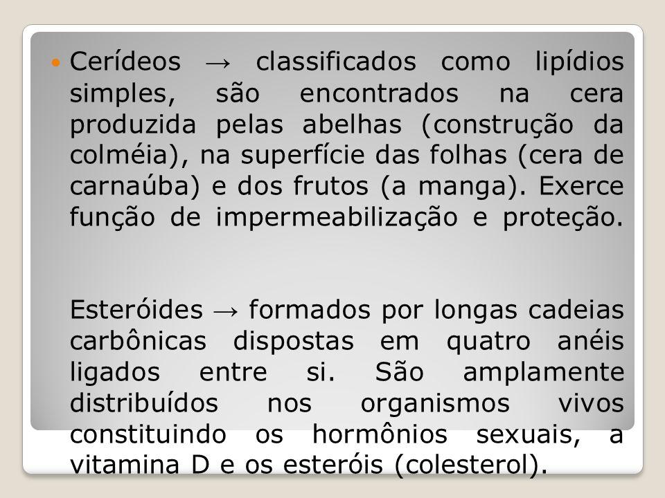 Cerídeos → classificados como lipídios simples, são encontrados na cera produzida pelas abelhas (construção da colméia), na superfície das folhas (cera de carnaúba) e dos frutos (a manga).