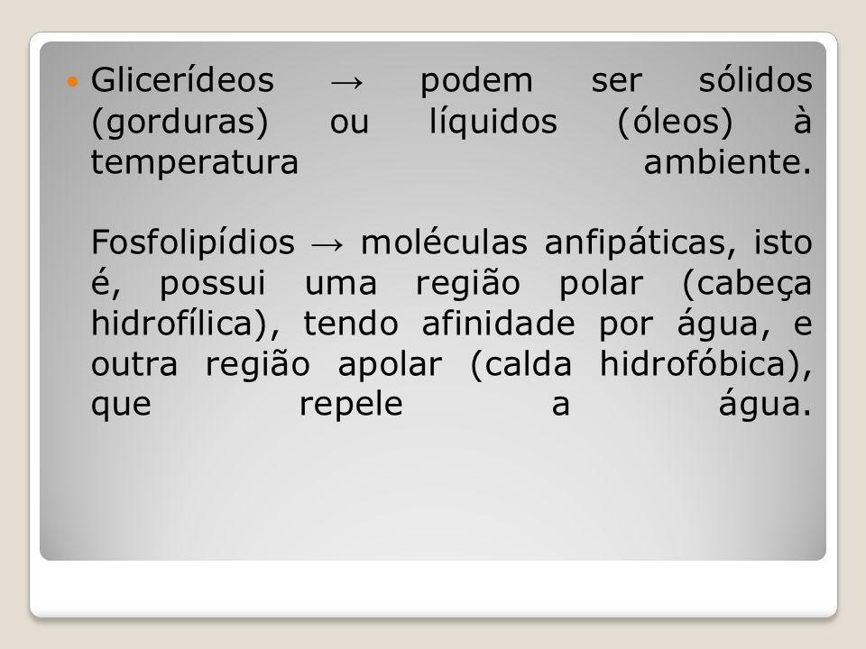 Glicerídeos → podem ser sólidos (gorduras) ou líquidos (óleos) à temperatura ambiente.