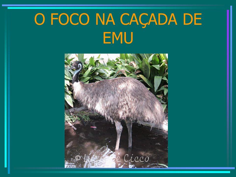 O FOCO NA CAÇADA DE EMU