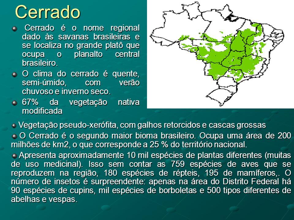Cerrado Cerrado é o nome regional dado às savanas brasileiras e se localiza no grande platô que ocupa o planalto central brasileiro.