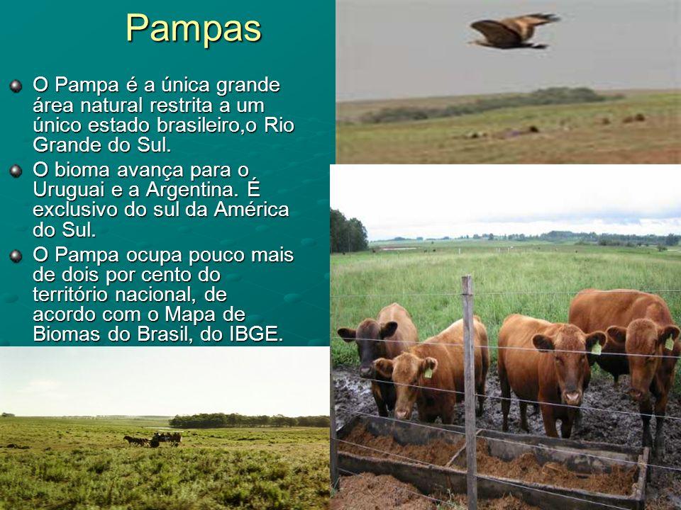 Pampas O Pampa é a única grande área natural restrita a um único estado brasileiro,o Rio Grande do Sul.