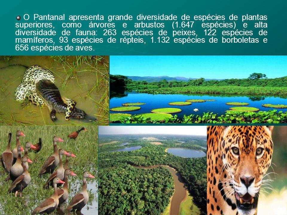 O Pantanal apresenta grande diversidade de espécies de plantas superiores, como árvores e arbustos (1.647 espécies) e alta diversidade de fauna: 263 espécies de peixes, 122 espécies de mamíferos, 93 espécies de répteis, 1.132 espécies de borboletas e 656 espécies de aves.