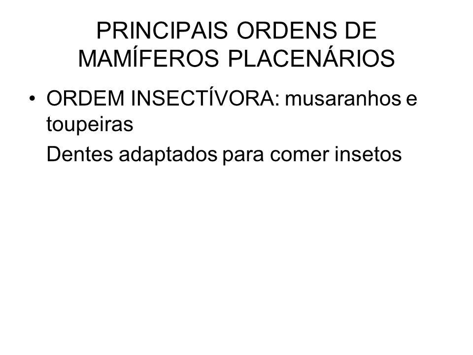 PRINCIPAIS ORDENS DE MAMÍFEROS PLACENÁRIOS