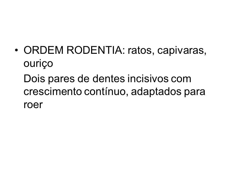 ORDEM RODENTIA: ratos, capivaras, ouriço