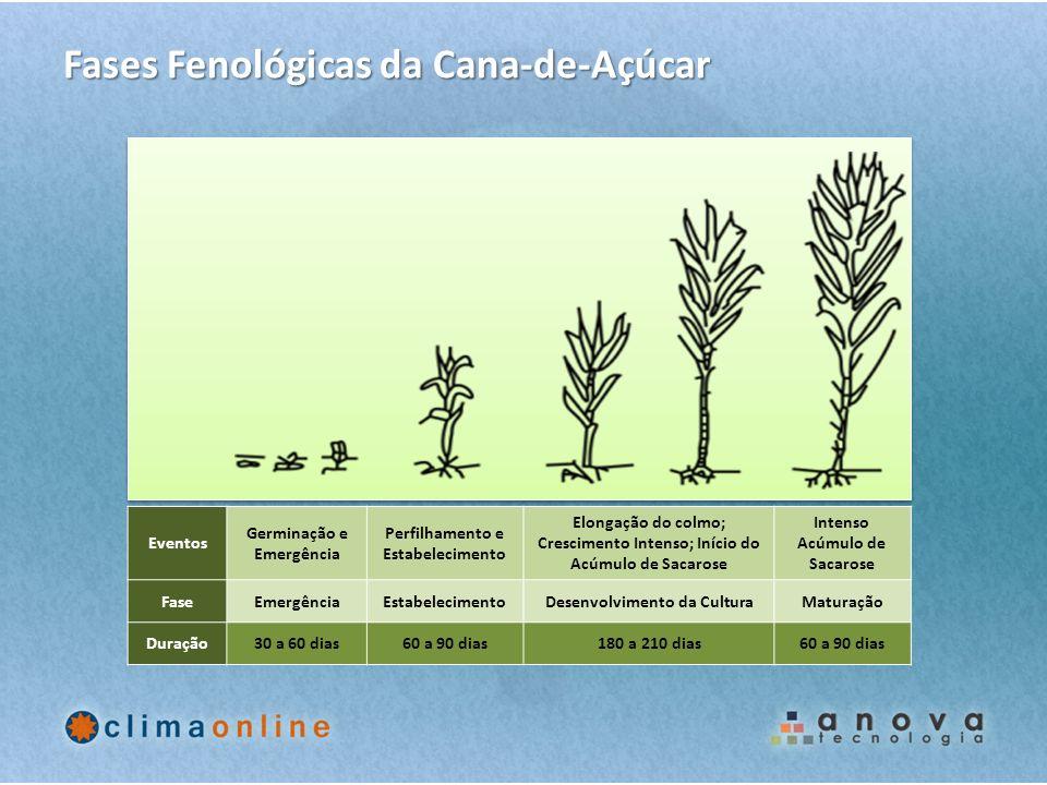 Fases Fenológicas da Cana-de-Açúcar