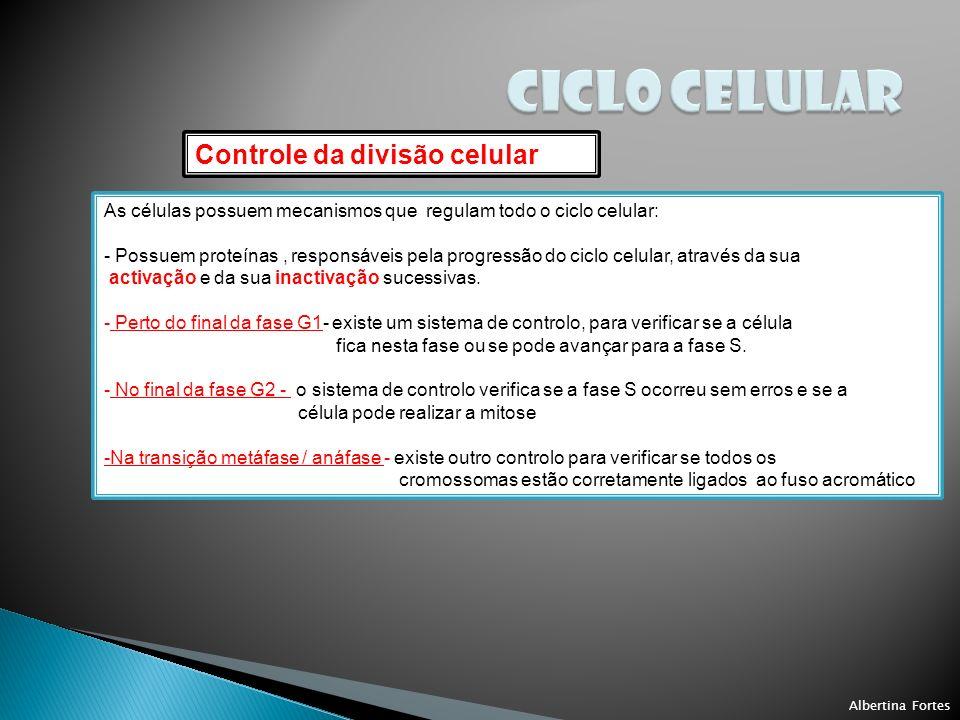 CICLO CELULAR Controle da divisão celular