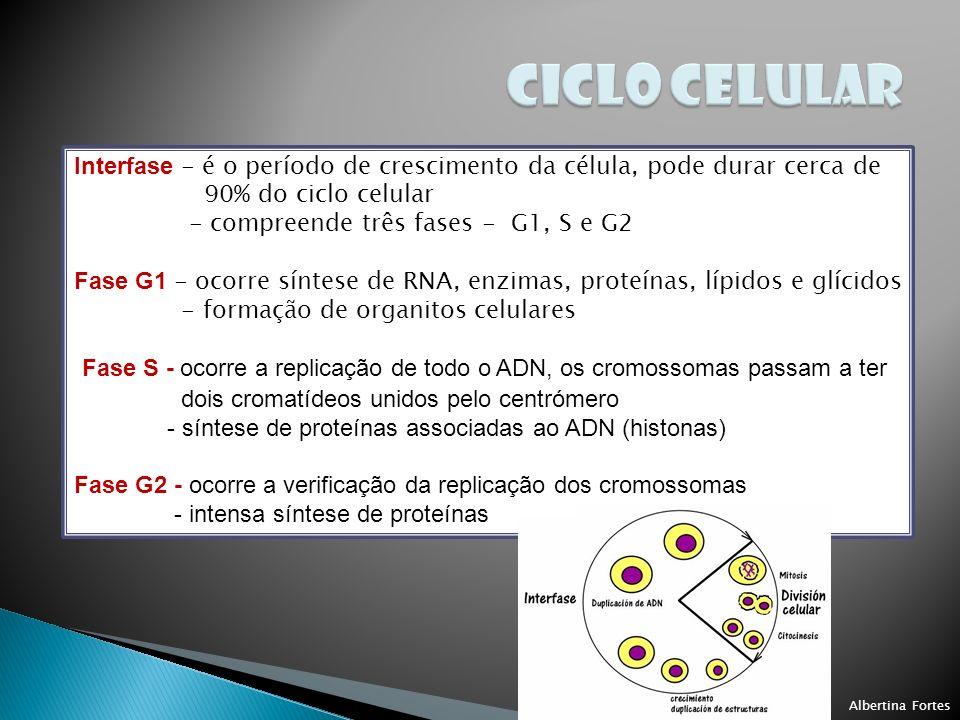 CICLO CELULAR Interfase - é o período de crescimento da célula, pode durar cerca de. 90% do ciclo celular.
