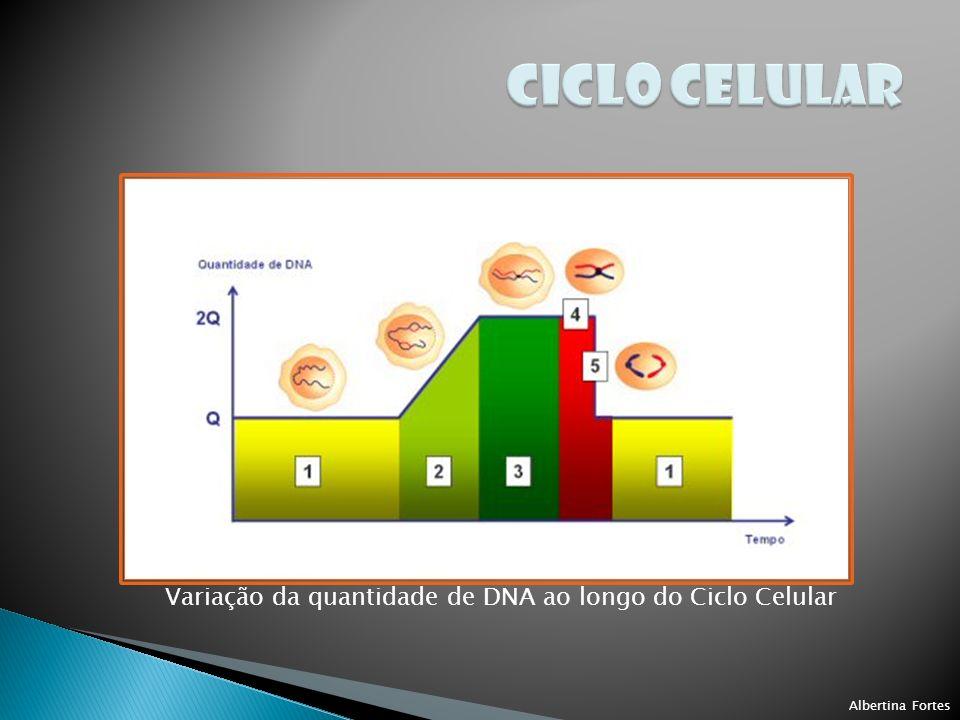 CICLO CELULAR Variação da quantidade de DNA ao longo do Ciclo Celular