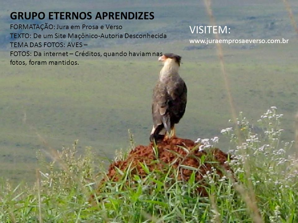 GRUPO ETERNOS APRENDIZES VISITEM: