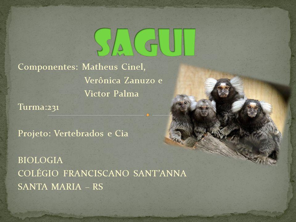 sagui Componentes: Matheus Cinel, Verônica Zanuzo e Victor Palma