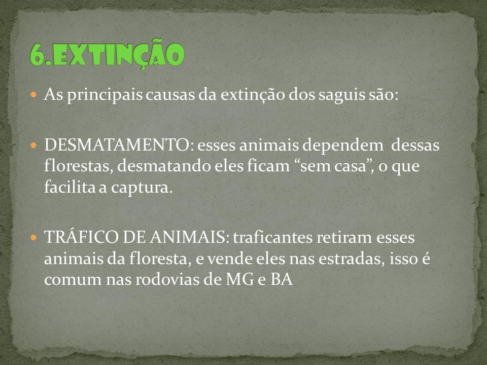 6.extinção As principais causas da extinção dos saguis são: