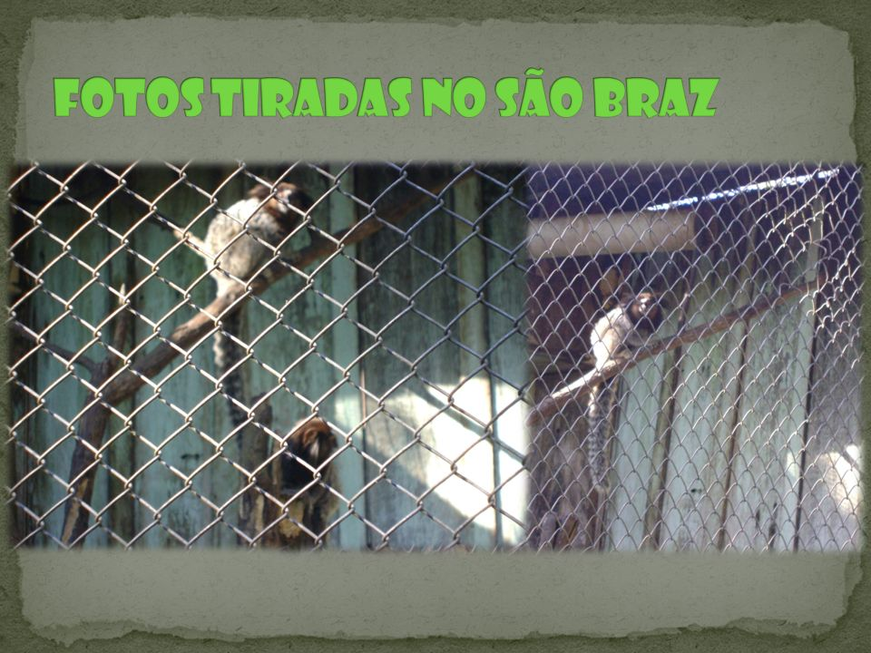 Fotos tiradas no São Braz