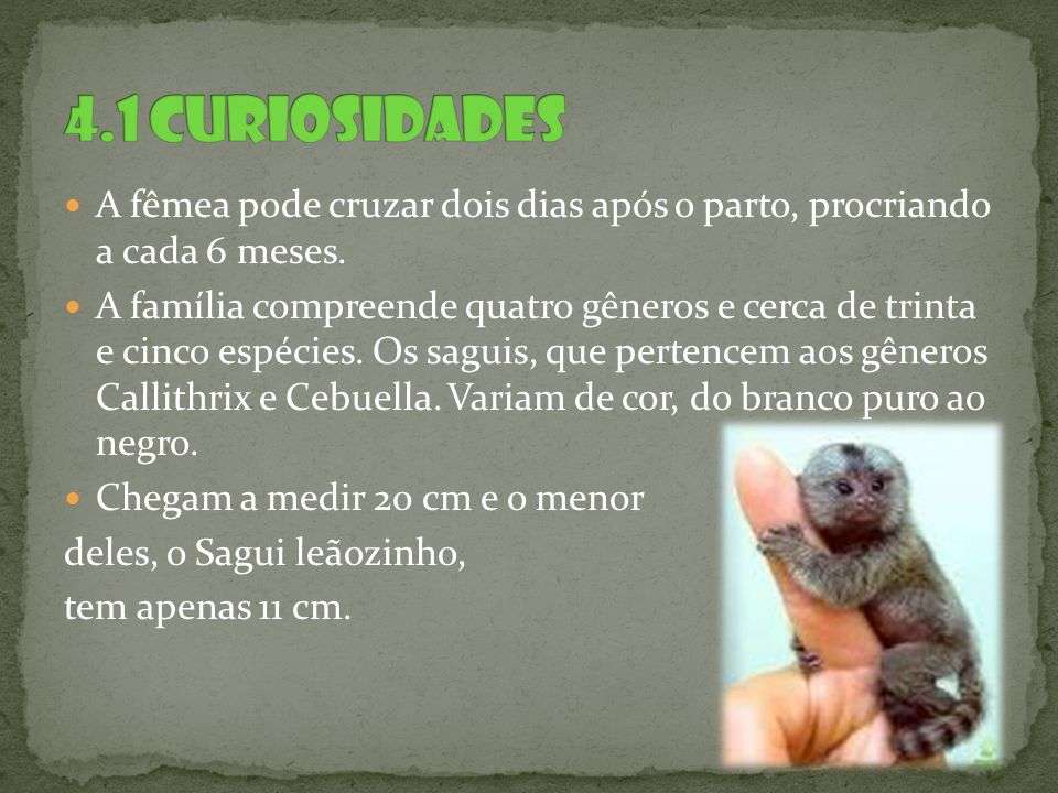 4.1 Curiosidades A fêmea pode cruzar dois dias após o parto, procriando a cada 6 meses.