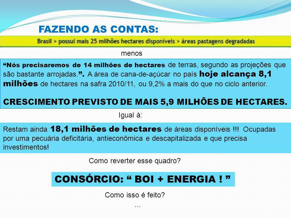 CONSÓRCIO: BOI + ENERGIA !