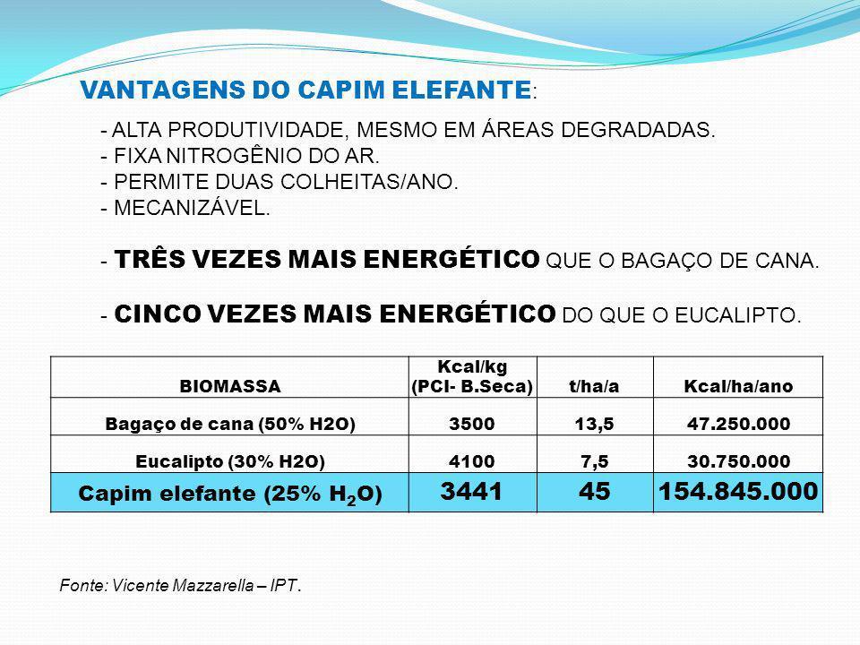 VANTAGENS DO CAPIM ELEFANTE: