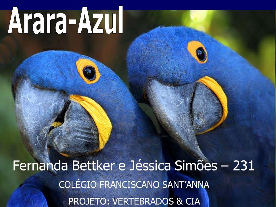 Arara-Azul Fernanda Bettker e Jéssica Simões – 231