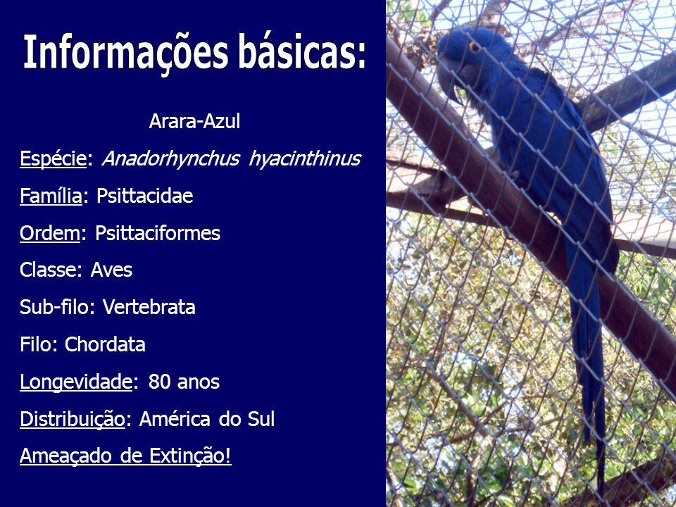 Informações básicas: Arara-Azul Espécie: Anadorhynchus hyacinthinus