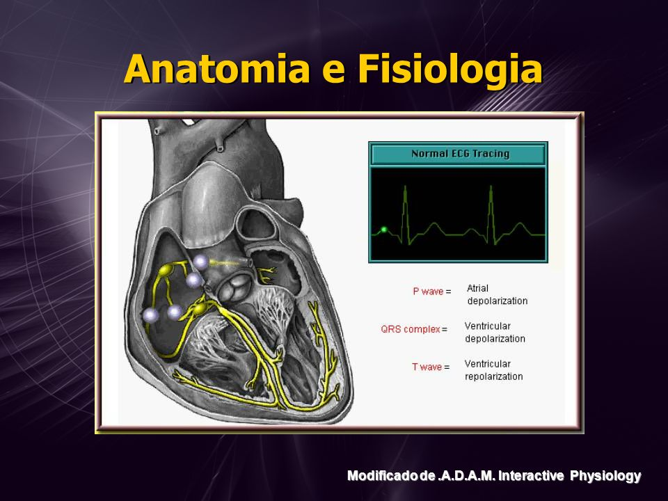 Anatomia e Fisiologia Modificado de .A.D.A.M. Interactive Physiology