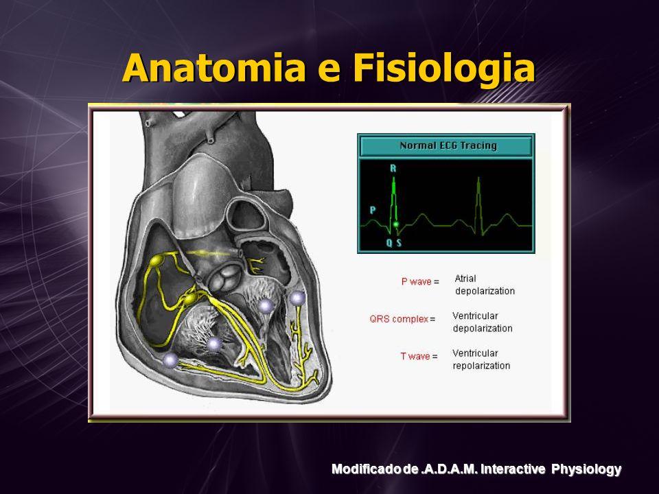 Anatomia e Fisiologia Modificado de .A.D.A.M. Interactive Physiology