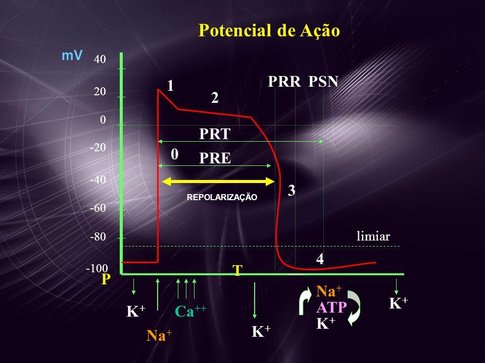Potencial de Ação PRR PSN 1 2 PRT PRE 3 4 T P Na+ K+ ATP K+ Ca++ K+ K+