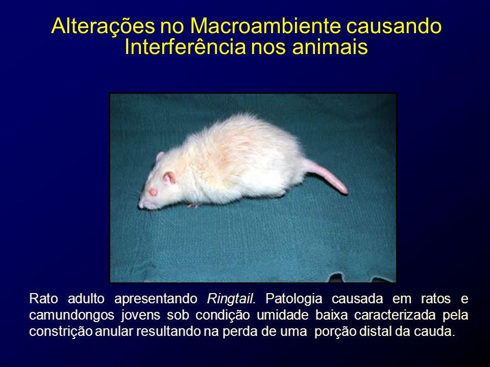 Alterações no Macroambiente causando Interferência nos animais