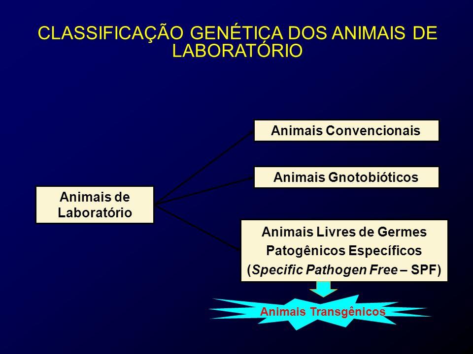Animais Convencionais Animais Gnotobióticos Animais de Laboratório