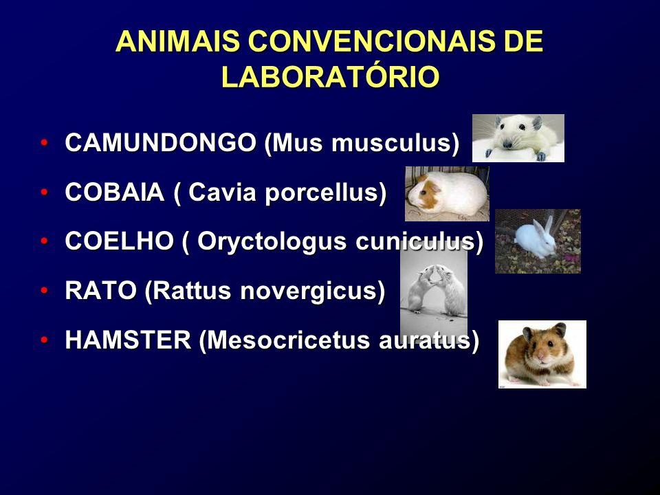 ANIMAIS CONVENCIONAIS DE LABORATÓRIO