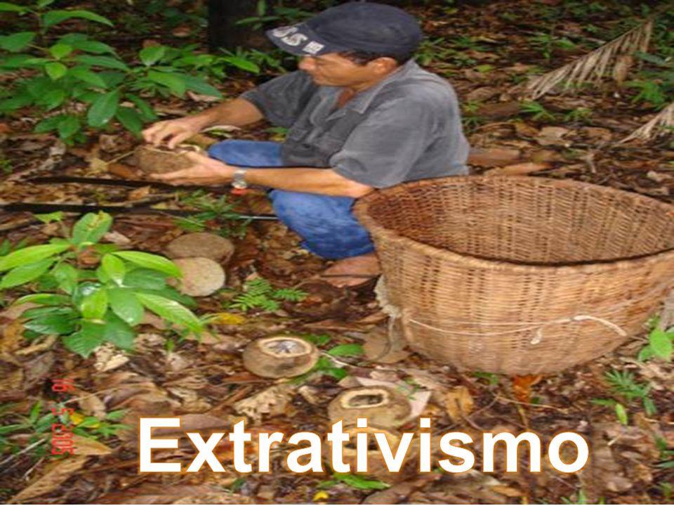 Extrativismo