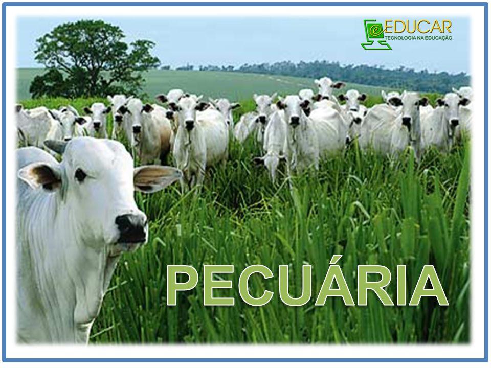 PECUÁRIA