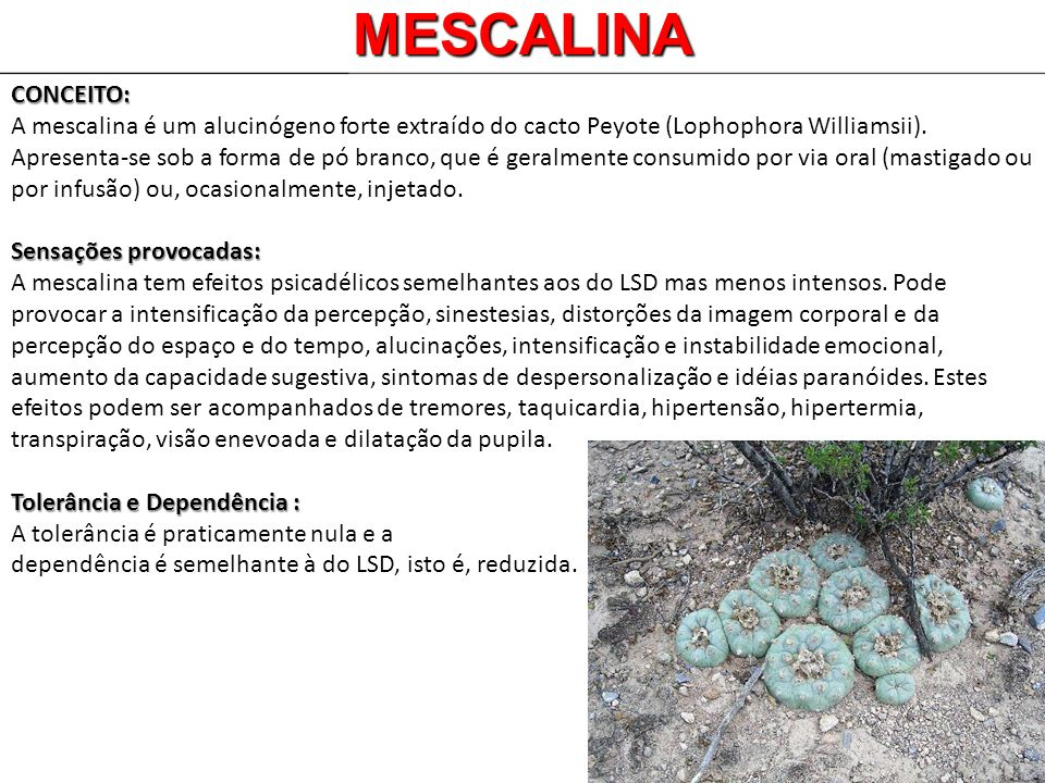 MESCALINA CONCEITO: