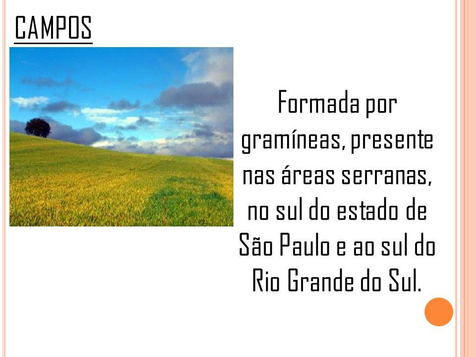 CAMPOS Formada por gramíneas, presente nas áreas serranas, no sul do estado de São Paulo e ao sul do Rio Grande do Sul.