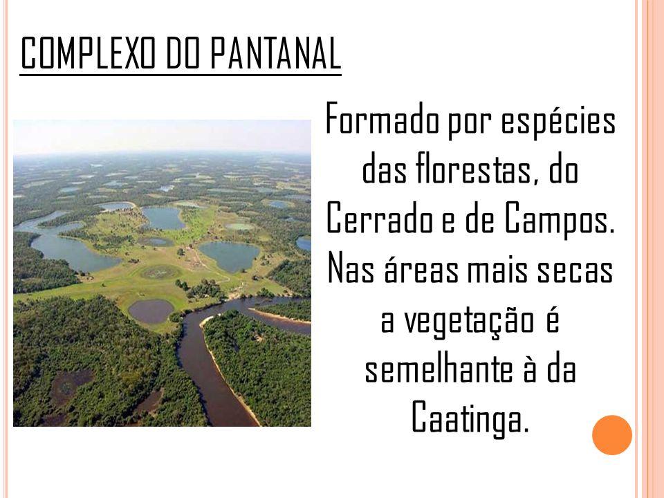 COMPLEXO DO PANTANAL Formado por espécies das florestas, do Cerrado e de Campos.