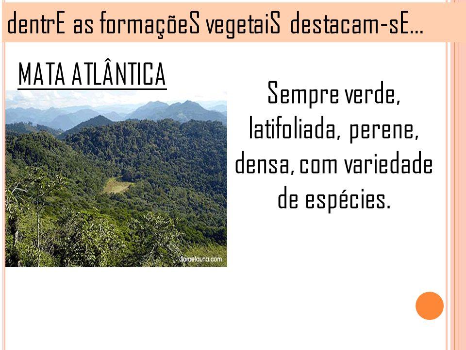 Sempre verde, latifoliada, perene, densa, com variedade de espécies.