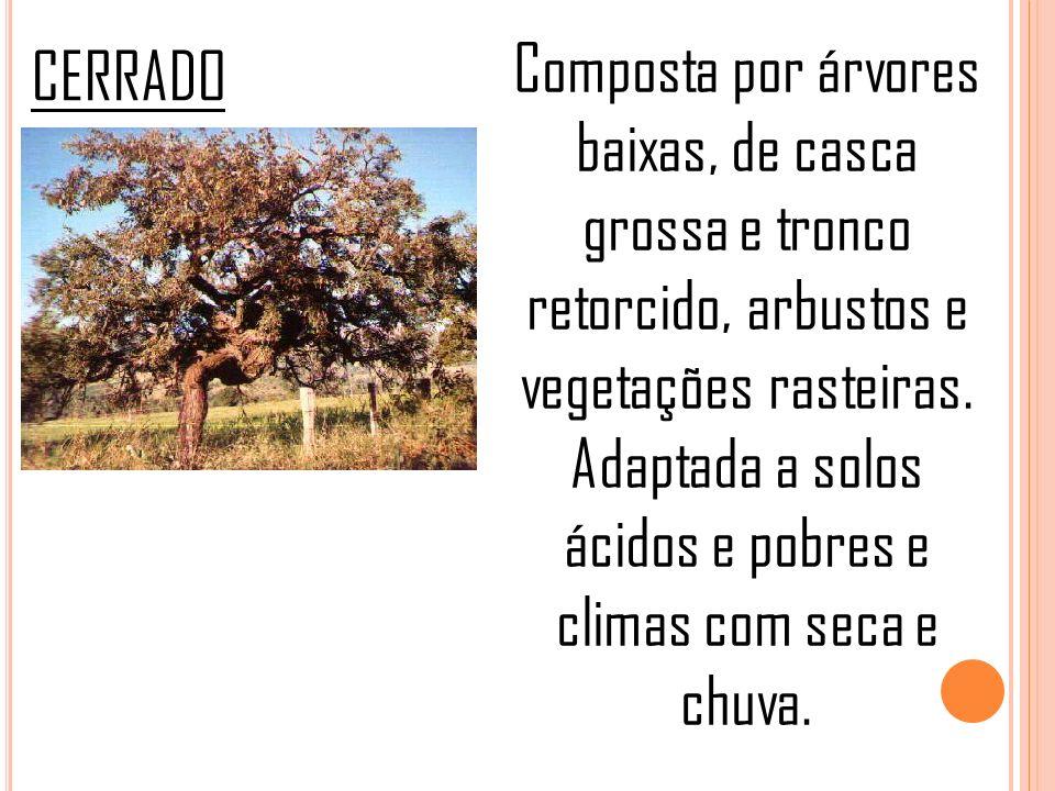 Composta por árvores baixas, de casca grossa e tronco retorcido, arbustos e vegetações rasteiras. Adaptada a solos ácidos e pobres e climas com seca e chuva.
