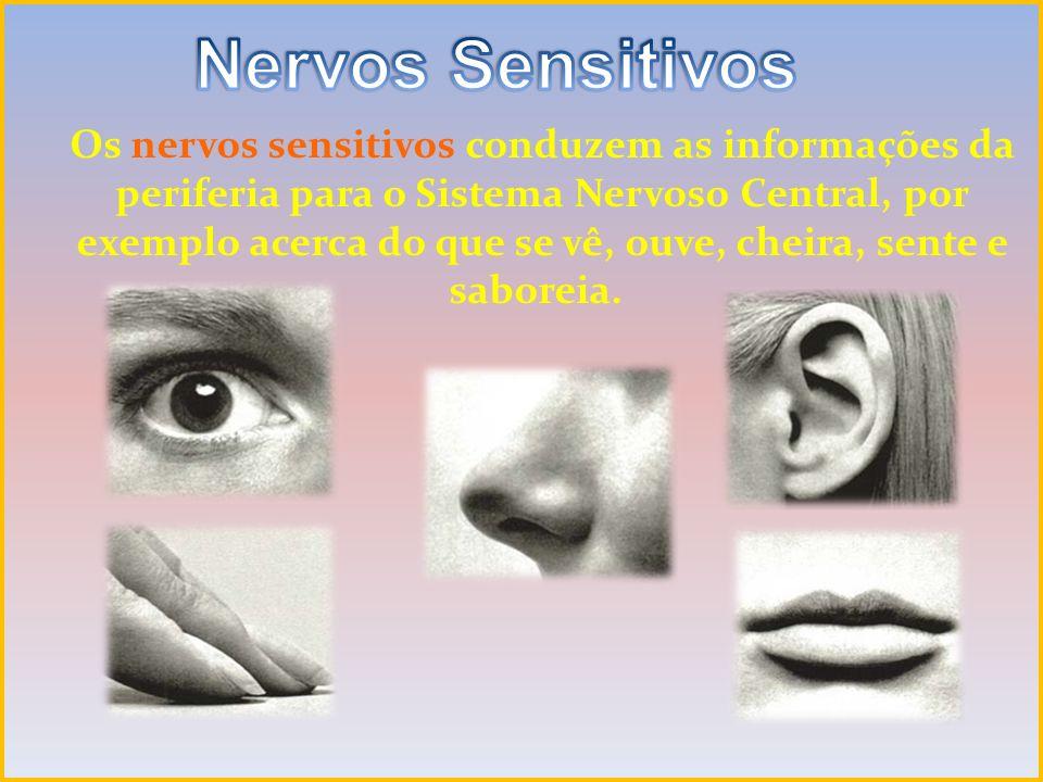 Nervos Sensitivos