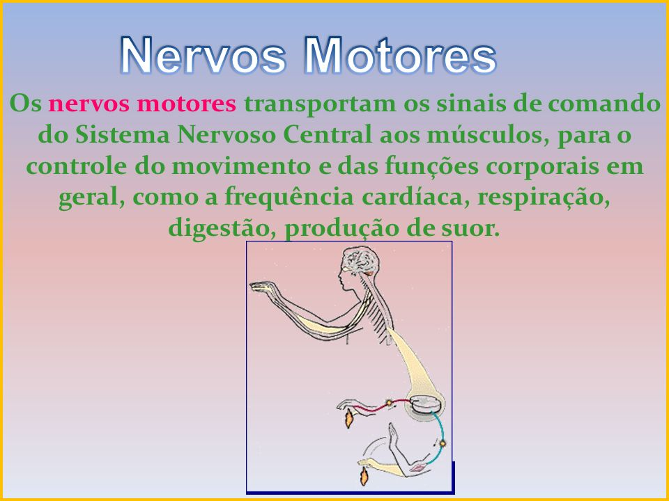 Nervos Motores