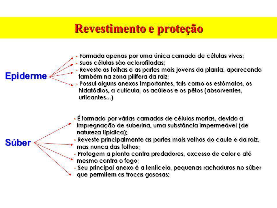 Revestimento e proteção