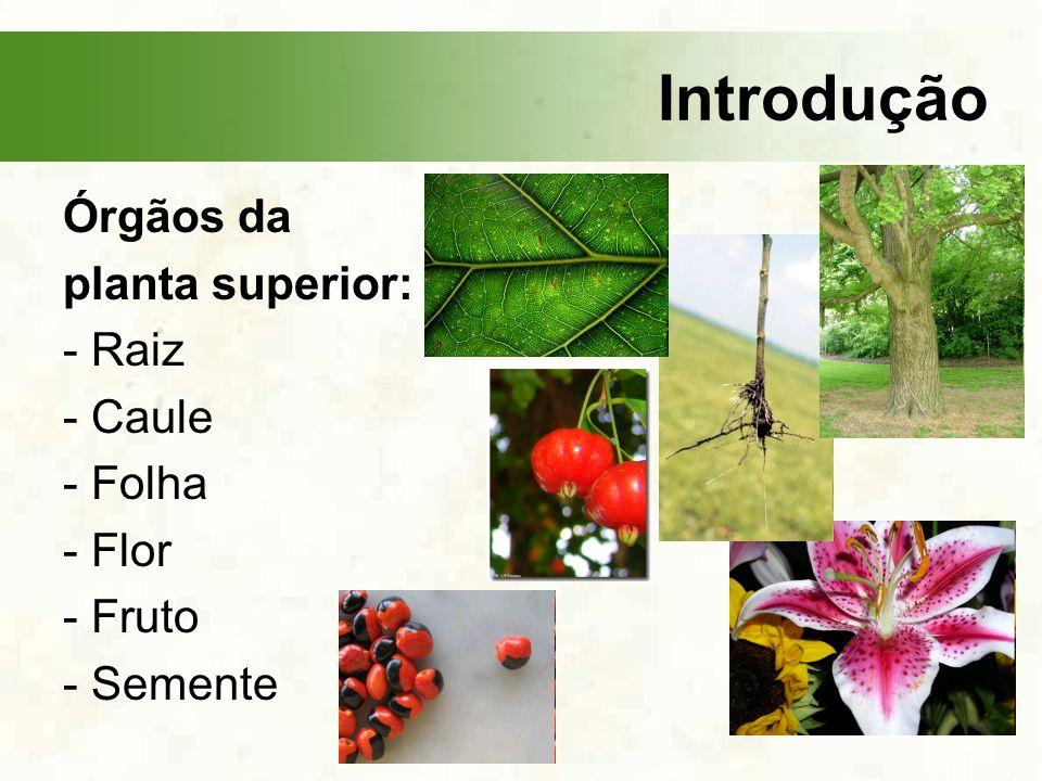 Introdução Órgãos da planta superior: - Raiz - Caule - Folha - Flor