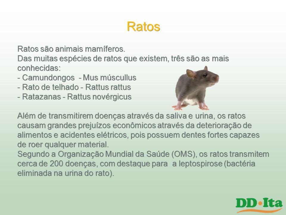 Ratos Ratos são animais mamíferos.
