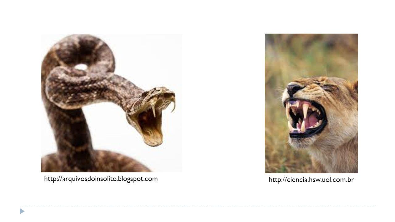 http://arquivosdoinsolito.blogspot.com http://ciencia.hsw.uol.com.br