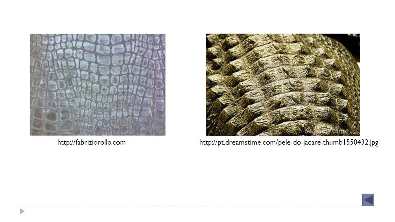 http://fabriziorollo.com http://pt.dreamstime.com/pele-do-jacare-thumb1550432.jpg