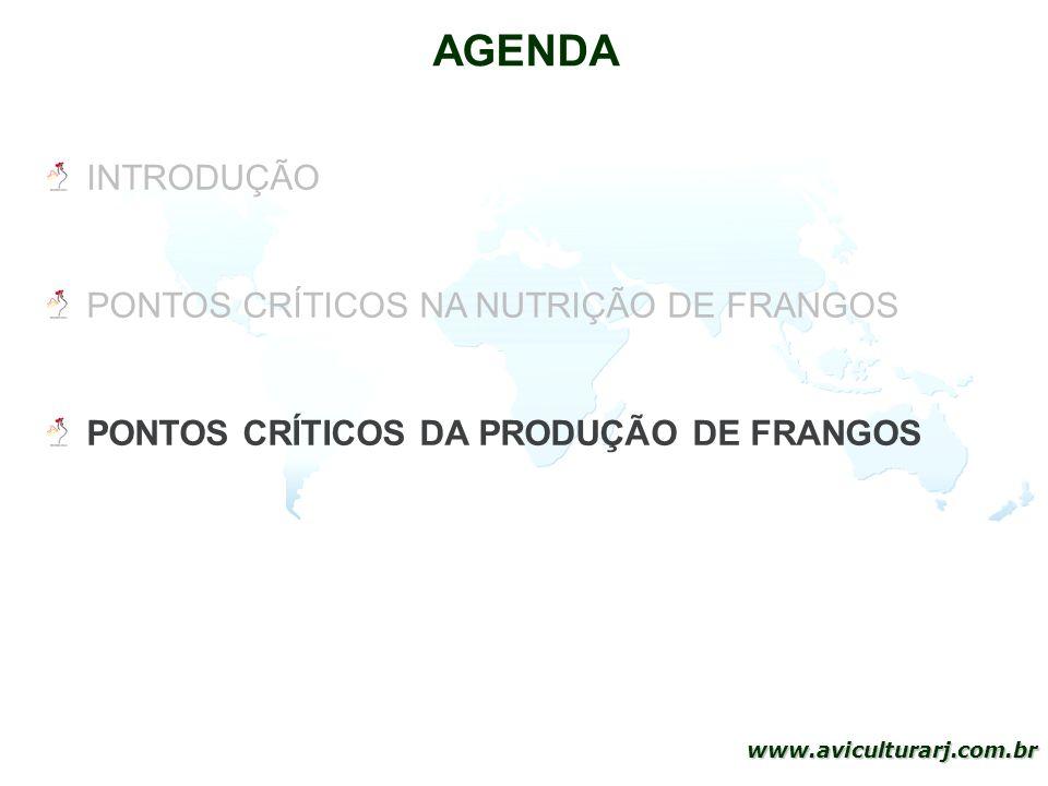 AGENDA INTRODUÇÃO PONTOS CRÍTICOS NA NUTRIÇÃO DE FRANGOS