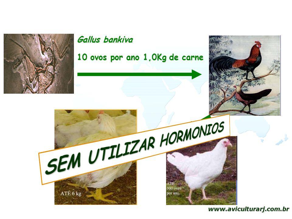 SEM UTILIZAR HORMONIOS