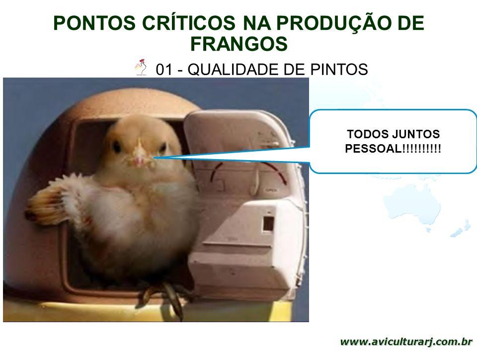 PONTOS CRÍTICOS NA PRODUÇÃO DE FRANGOS