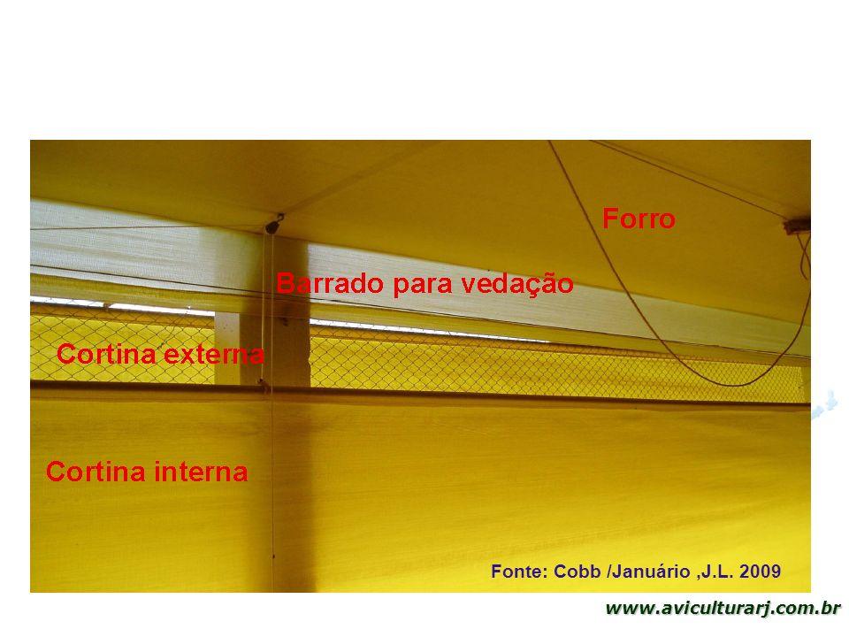 Fonte: Cobb /Januário ,J.L. 2009